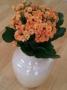 beautiful-orange-flowers