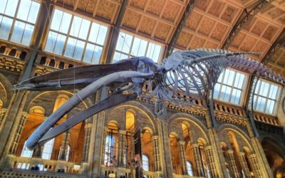 An Inquisitive Trip To The Natural History Museum