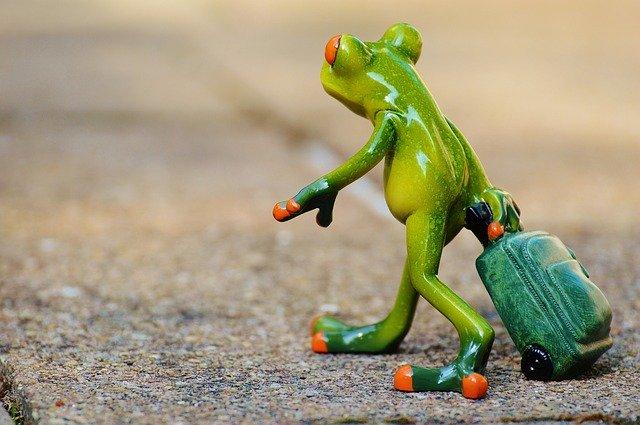 Frog farewell