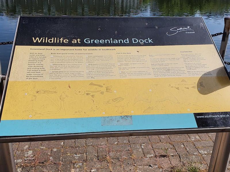 Wildlife at Greenland dock
